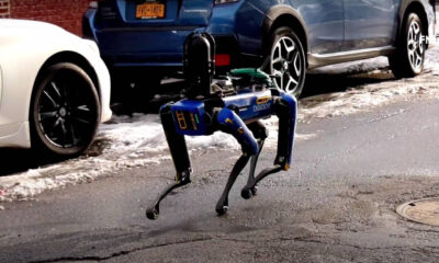 spot perro robot nueva york
