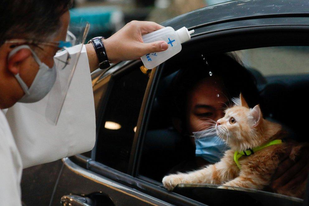 gato agua