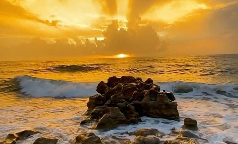 playas palm beaches