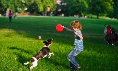 perro jugar