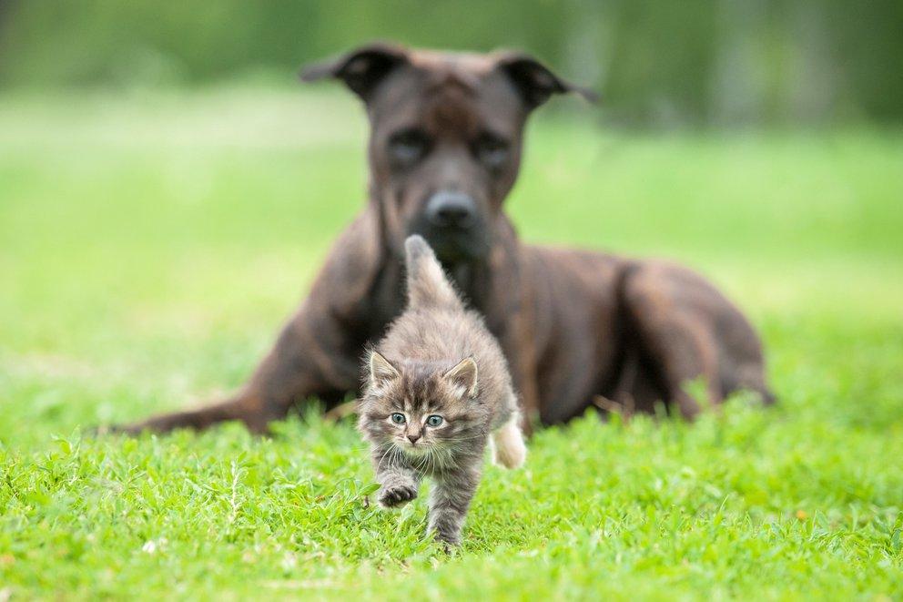 perros persiguen gatos