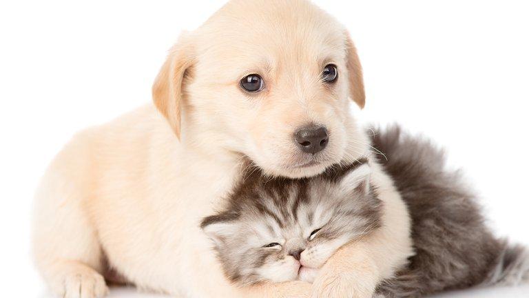 perros y gatos refran