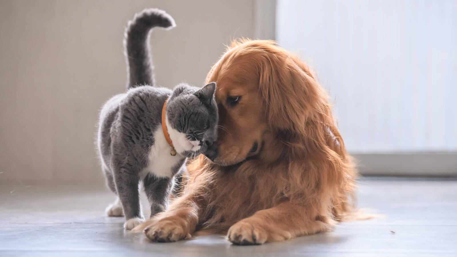 Como perros y gatos