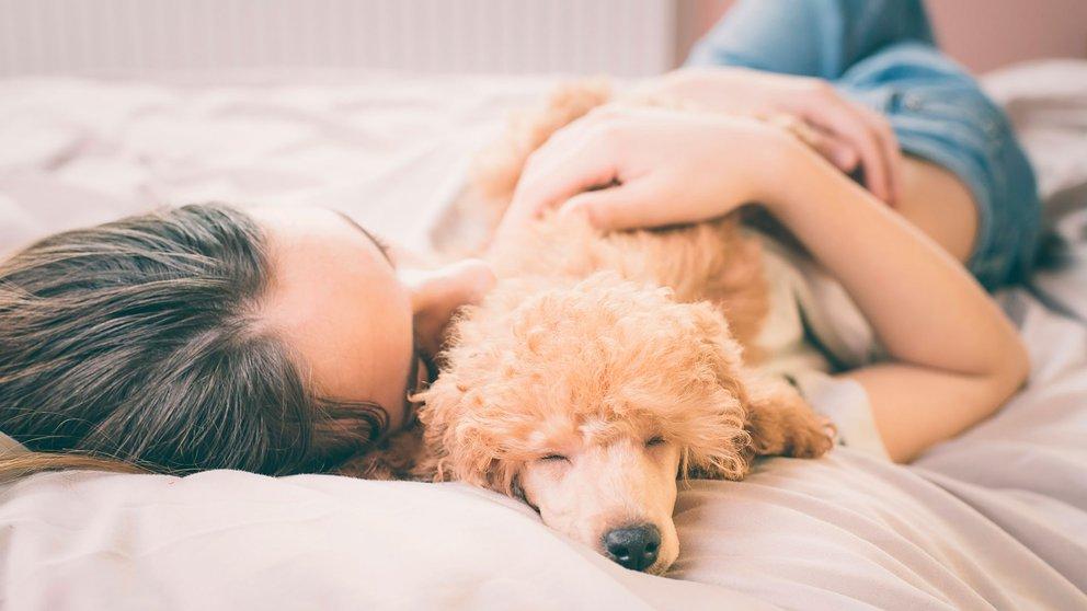 dormir con los perros