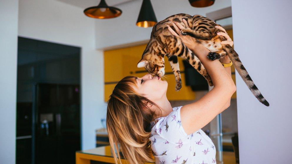 gatos perros castracion mitos