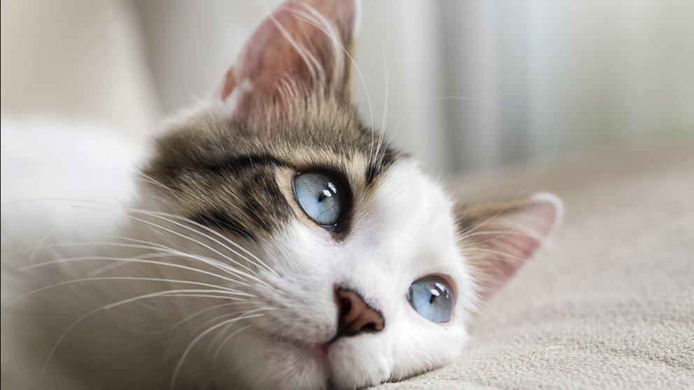 gatos limpios