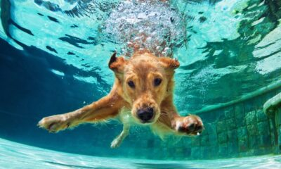 perros piscina
