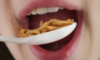 insectos proteína