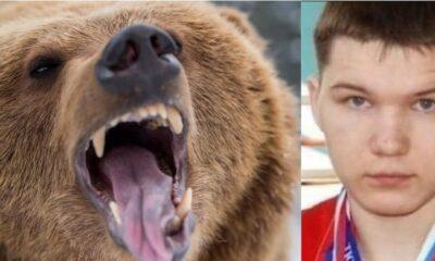 oso boxeador